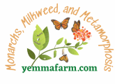 Monarchs, Milkweed, and Metamorphosis - how to attract and support monarch butterflies