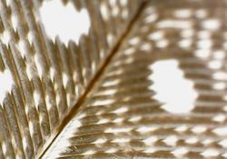 bird feather - Mahrle: Bolton Elementary: Forsyth County