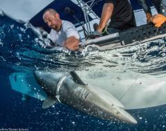 Alex Hearn with a shark